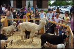 July 2016 – Hastings Rivertown Days Petting Zoo